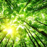 background image of sun dappled through a forest canopy